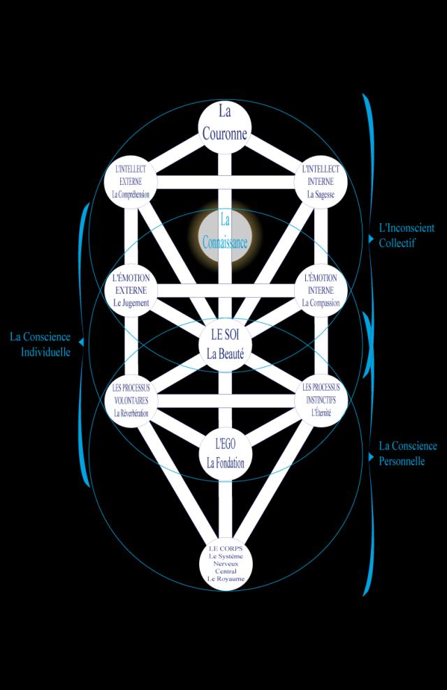 03wa197611 Figure 11 • La Psyché.Figure 11 • La Psyché.Dans cet Arbre Assiyatique nous voyons l'interpénétration de la psyché et du corps. La face inférieure génère grâce à l'intelligence cellulaire les trois types organiques, alors que la face supérieure qui est aussi la face inférieure de Yetzirah produit l'Ego, la Fondation de la psyché, dans le Daat, qui est la Connaissance du Corps.The Way of Kabbalah, Z'ev ben Shimon Halevitraduit par Carole Bussière